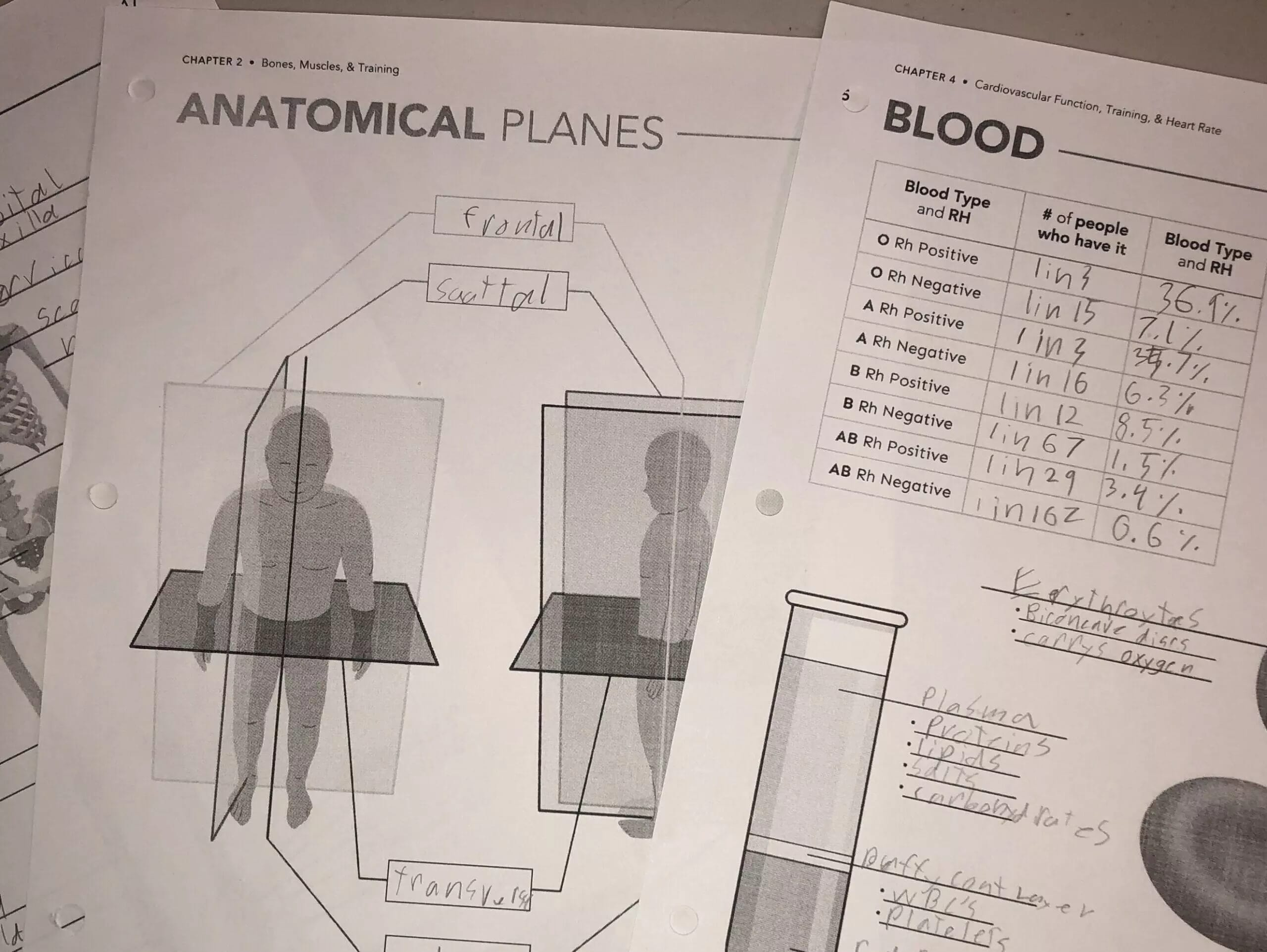 Worksheets are included in the Exercise and Sports Physiology class by College Prep science in order to reinforce learning.